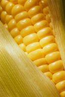 blog yellow corn